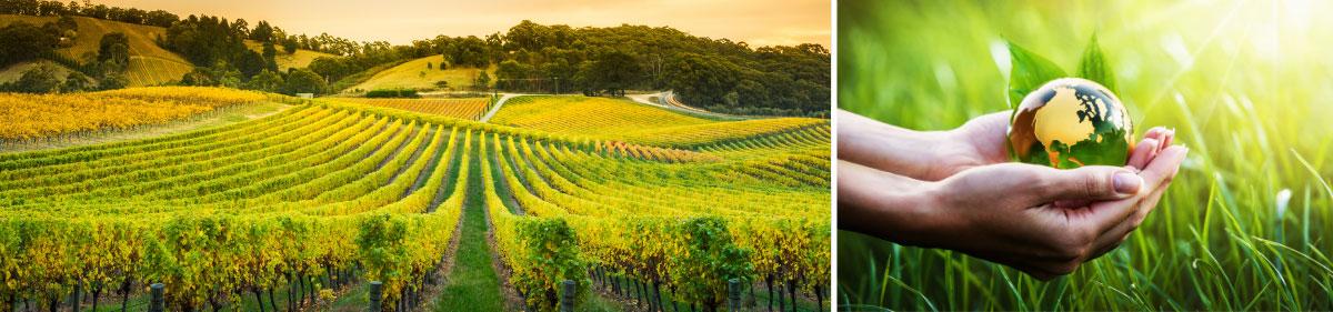 Viticulture et environnement